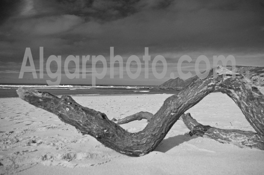 Algarve photography Amoreira Driftwood