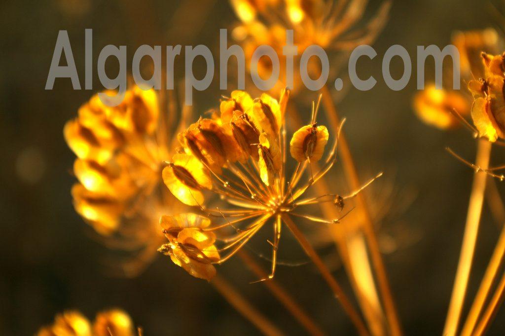 Algarve photography Springtime