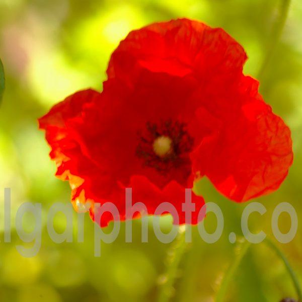 Algarve photography colour macro image
