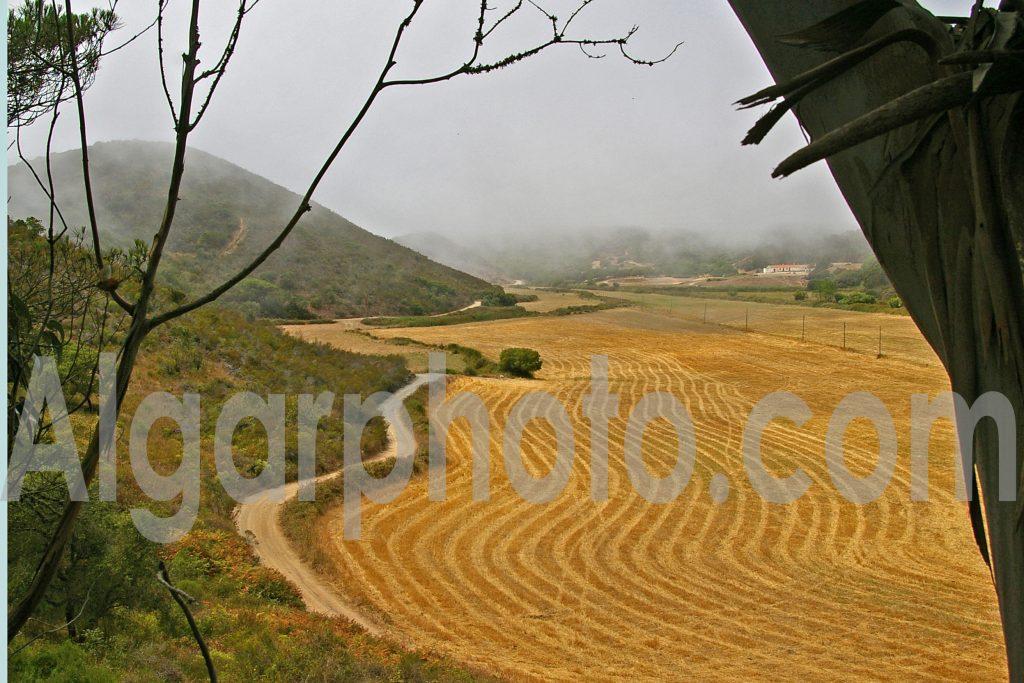 Algarve photography Aljezur Crops
