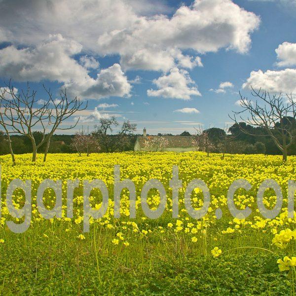 Algarve photography colour landscape image