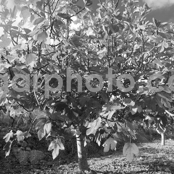 Algarve photography mono images by algarphoto