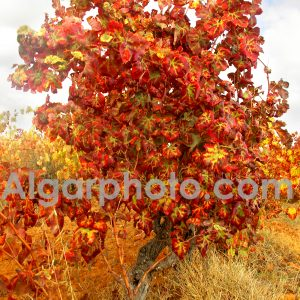 Algarve photography colour images by algarphoto