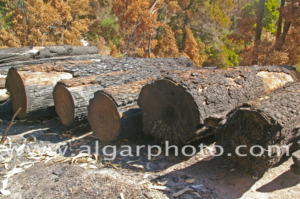 Algarve photography burnt logs following the wildfires in Monchique (also in mono)