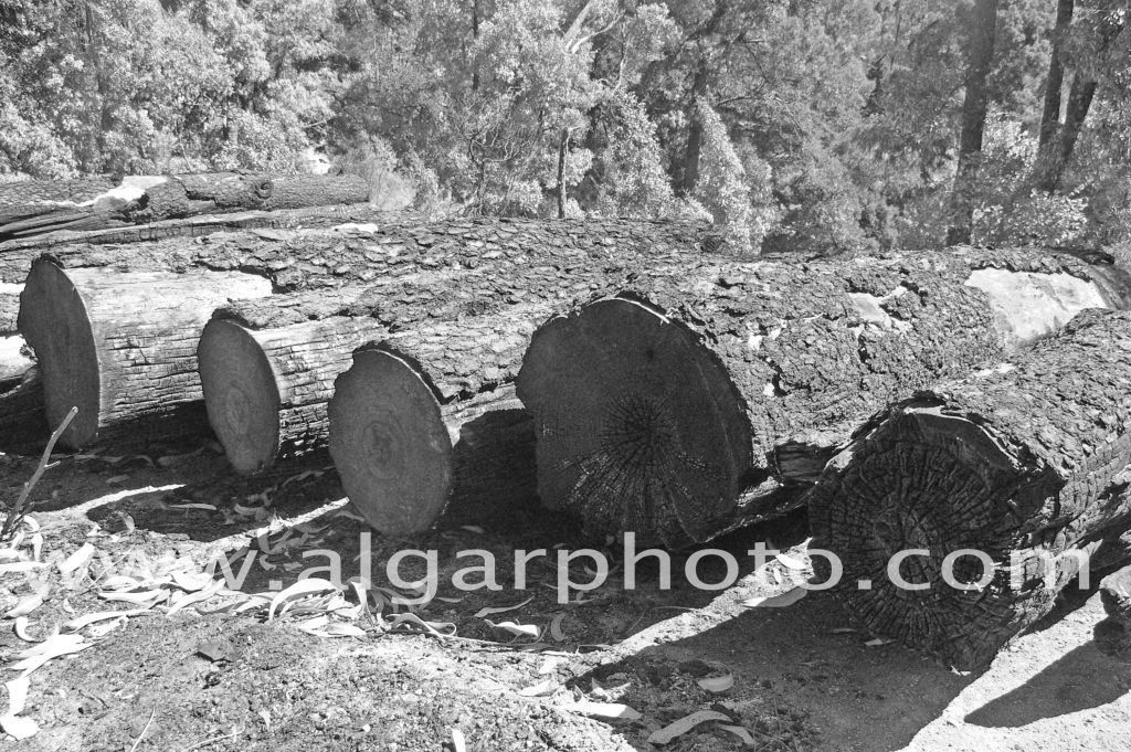 Algarve photography burnt logs after wildfires in Monchique Mono